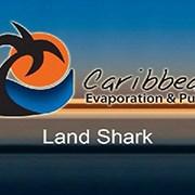 Caribbean Land Shark
