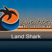 Caribbean Land Shark